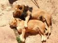 ТОП-25 ФОТО животных, которые умеют любить