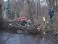 Сильный ветер во Львове валил деревья и травмировал людей