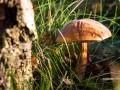 В Иране произошло массовое отравление грибами