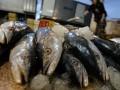 Мировые цены на рыбу поставили новый рекорд