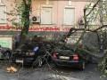 В Киеве дерево упало на автомобили