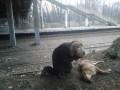 В Киеве неизвестные расстреляли 29 бездомных собак