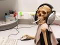 Половина офисных сотрудников считают себя трудоголиками
