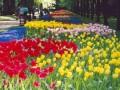 В цветах из Нидерландов на украинской таможне обнаружили опасный вирус