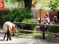 Открытые вольеры и электропастухи: в столичном зоопарке грядут изменения