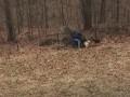 Собаки помешали американцу выбросить елку