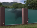 В японском зоопарке для слонов построили прозрачный бассейн