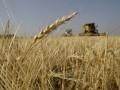 DW: Украина хочет стать мировой житницей