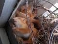 Во Львове на подоконнике в подъезде дома обосновались белки