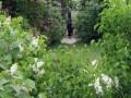 Экологическая комиссия рекомендует Киевсовету предоставить парку Юность статус памятника
