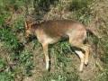 В Кропивницком массово травят собак: животные умирают в судорогах