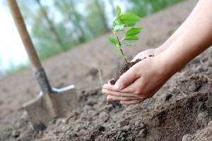 Во Львове потратили 2 млн грн на озеленение к Новому году