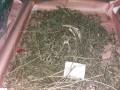 """Житель Днепра дома хранил 1,5 кг марихуаны и """"метамфетамин"""""""