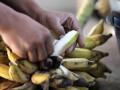 В Туркменистане впервые вырастили урожай бананов