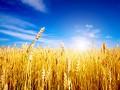 В Минагрополитики озвучили прогноз по экспорту зерновых на два года