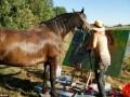 Картины, нарисованные лошадью, продают по $2500 (ФОТО, ВИДЕО)