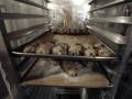 После выборов в Украине существенно подорожает хлеб