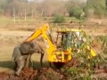 В Индии экскаватор вытащил слоненка, а тот напал на спасителя
