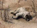 В Ботсване убили почти 90 слонов: Ученые заявили о глобальной угрозе