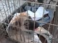 В Бердянске пенсионер сбросил пса с моста: Мужчине грозит до 3 лет