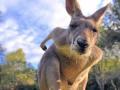 Животные недели: любопытный кенгуру, дракон Комодо и тренировки в зоопарке