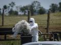 Недалеко от украинско-польской границы выявлен случай заражения сибирской язвой