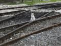 Чистая прибыль российской железнодорожной госмонополии обрушилась вдвое