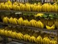 В супермаркеты Берлина поступило 400 кг кокаина вместо бананов