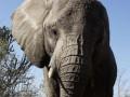 В Кении конфисковали две тонны слоновьих бивней