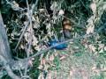 В Запорожье возле школы нашли гранаты