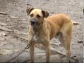 На Львовщине домашний пес загрыз пенсионерку насмерть