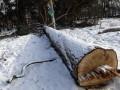Прокуратура возбудила дело по факту незаконной вырубки 84 деревьев в киевском сквере