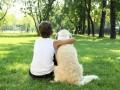 В Киеве запретили выгул собак у школ и больниц