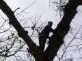 Школьник залез на дерево за грибами и не смог спуститься