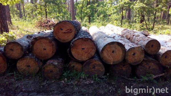 Даже в 2019 году продолжаются вырубки лесов, однако уже незаконные
