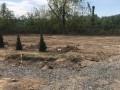 В Ужгороде украли недавно посаженные туи