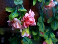 Украинцев просят не приносить на кладбище пластиковые цветы
