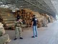 СБУ разоблачила масштабную вырубку леса в Винницкой области