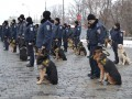 Милиция Украины переходит в режим