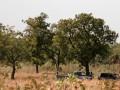 Боевики Мали устроили бойню в офисе местного губернатора