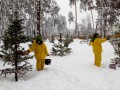 В Киеве коммунальщики обработали елки вонючей жидкостью