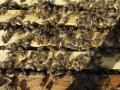 В ЮАР более 40 детей попали в больницу после нападения пчел