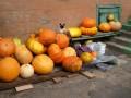Словаки вложили один миллион евро в украинскую агрокомпанию