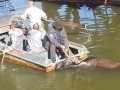 На территории ЧАЭС из водоема спасли лося