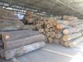 В делах о незаконной вырубке леса провели больше ста обысков
