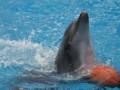 Дельфинов в Донецке больше нет. Как вывозили морских артистов из зоны АТО (видео)