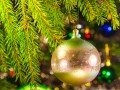 На новогодней елке живут 25 тысяч паразитов: от клещей до вшей