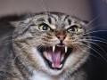Кот задушил 9-месячного ребенка в Винницкой области