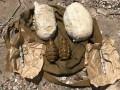 СБУ в Запорожье нашла тайник со взрывчаткой