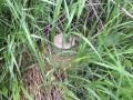 В Луганской области обнаружили взрывные устройства